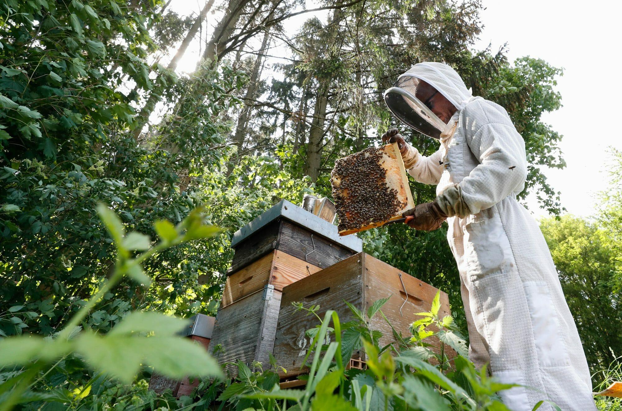 Apiculteur Beetasty travaillant dans ses ruches